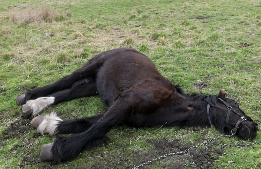 Horse Killed and Abused in Jönköping