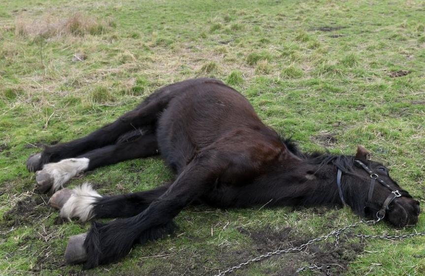 Horse Killed and Abused inJönköping